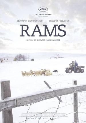 """Das Filmplakat zu """"rams"""" / """"Sture Böcke""""."""